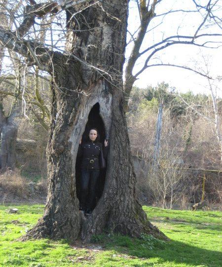 Буратинородящее дерево
